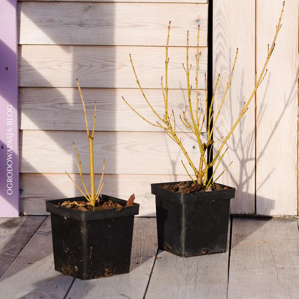 krzewy z patyków