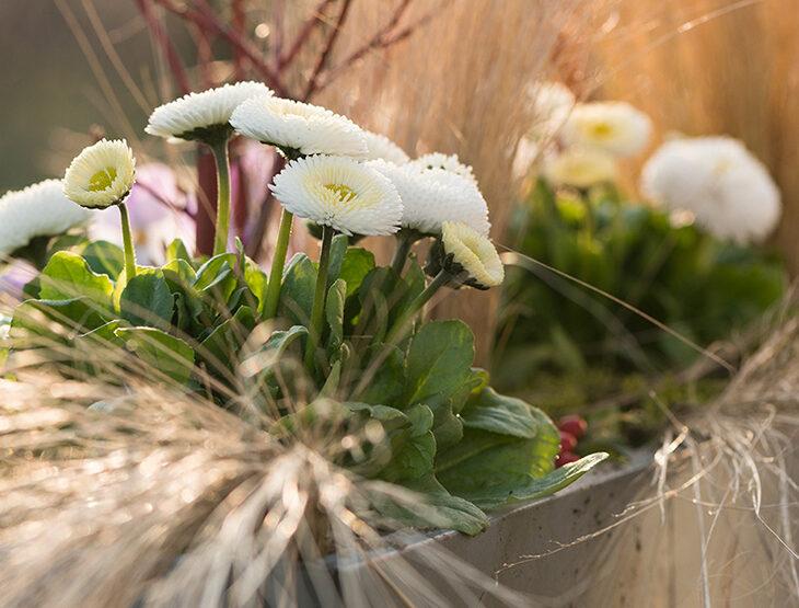 wiosenne dekoracje donic