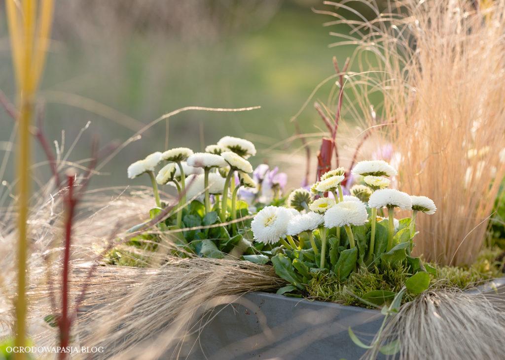 wiosenne dekoracje w donicach