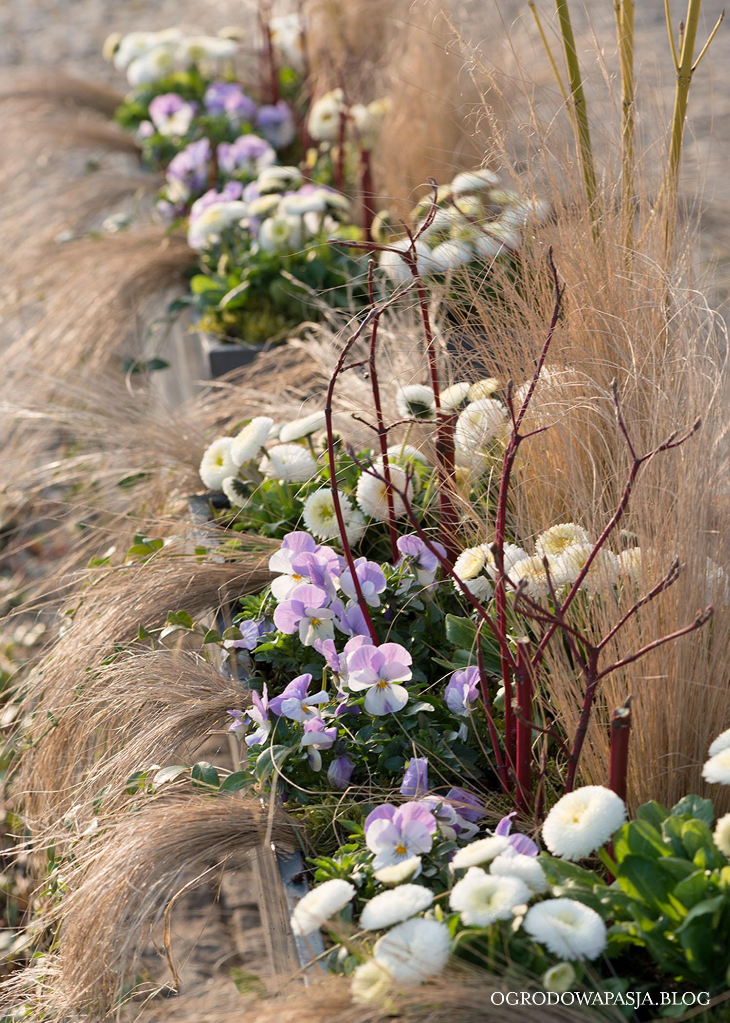 kwiaty wiosenne kompozycje