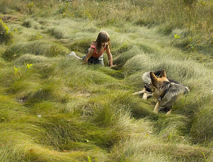 trawniki ekologiczne niekoszone