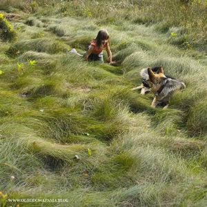 kosić nie kosić trawniki ekologiczne