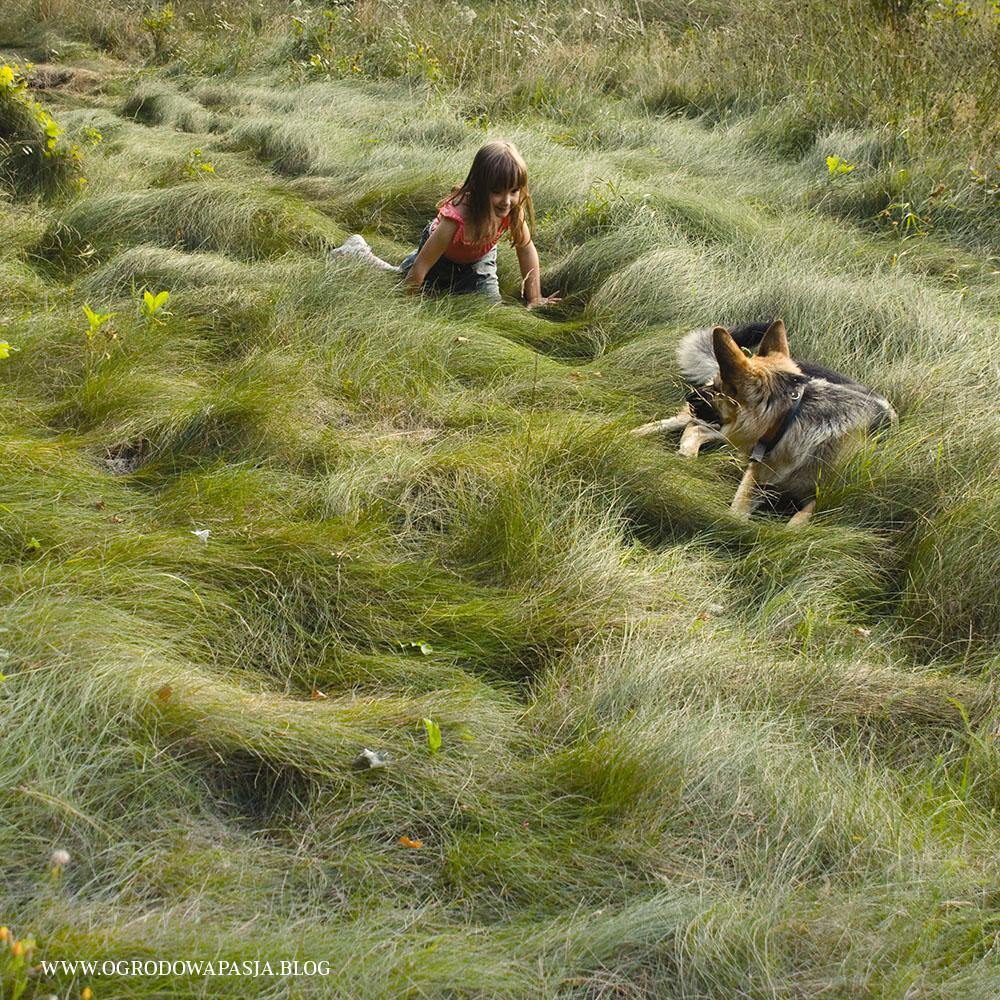 trawnik ekologiczny niekoszony