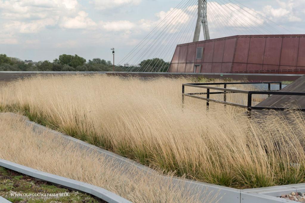 trawy ozdobne śmiałki darniowe