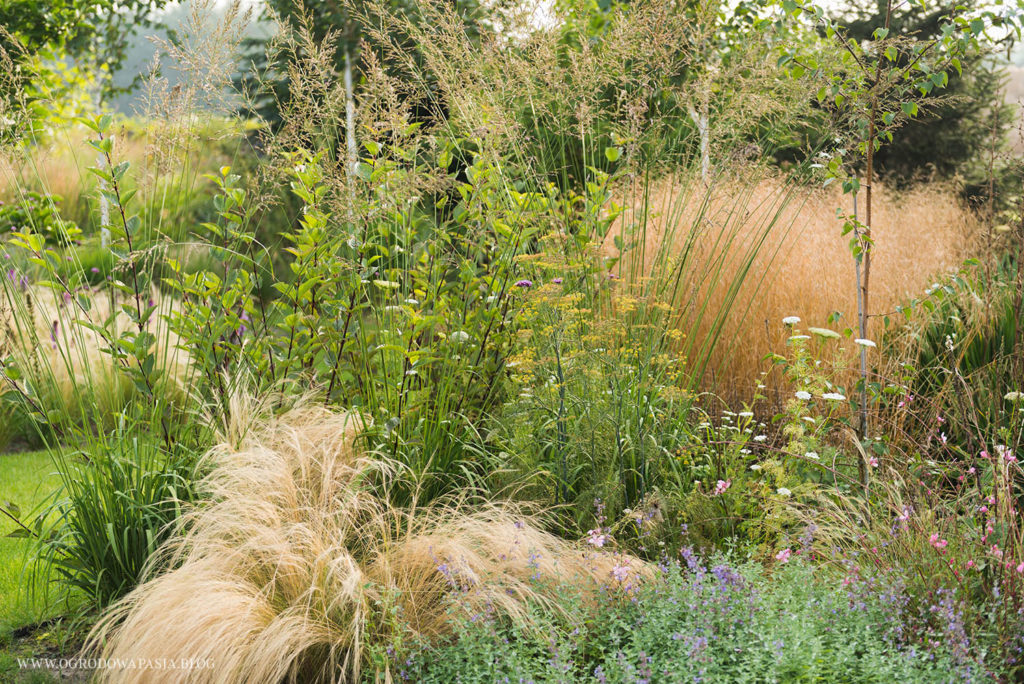 molinia deschampsia stipa
