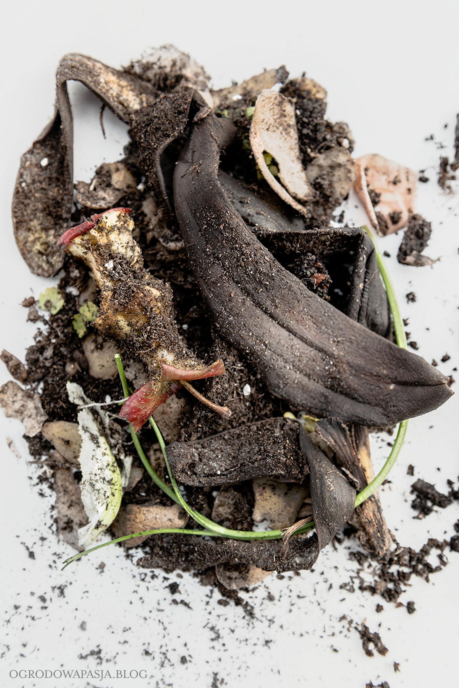 odpadki kuchenne kompostowanie