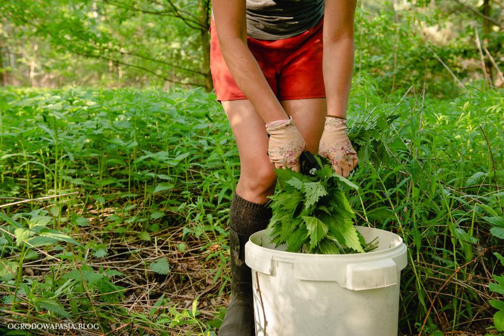 gnojówka z pokrzyw jak zrobić