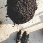 jak oddzielić dżdżownice od kompostu
