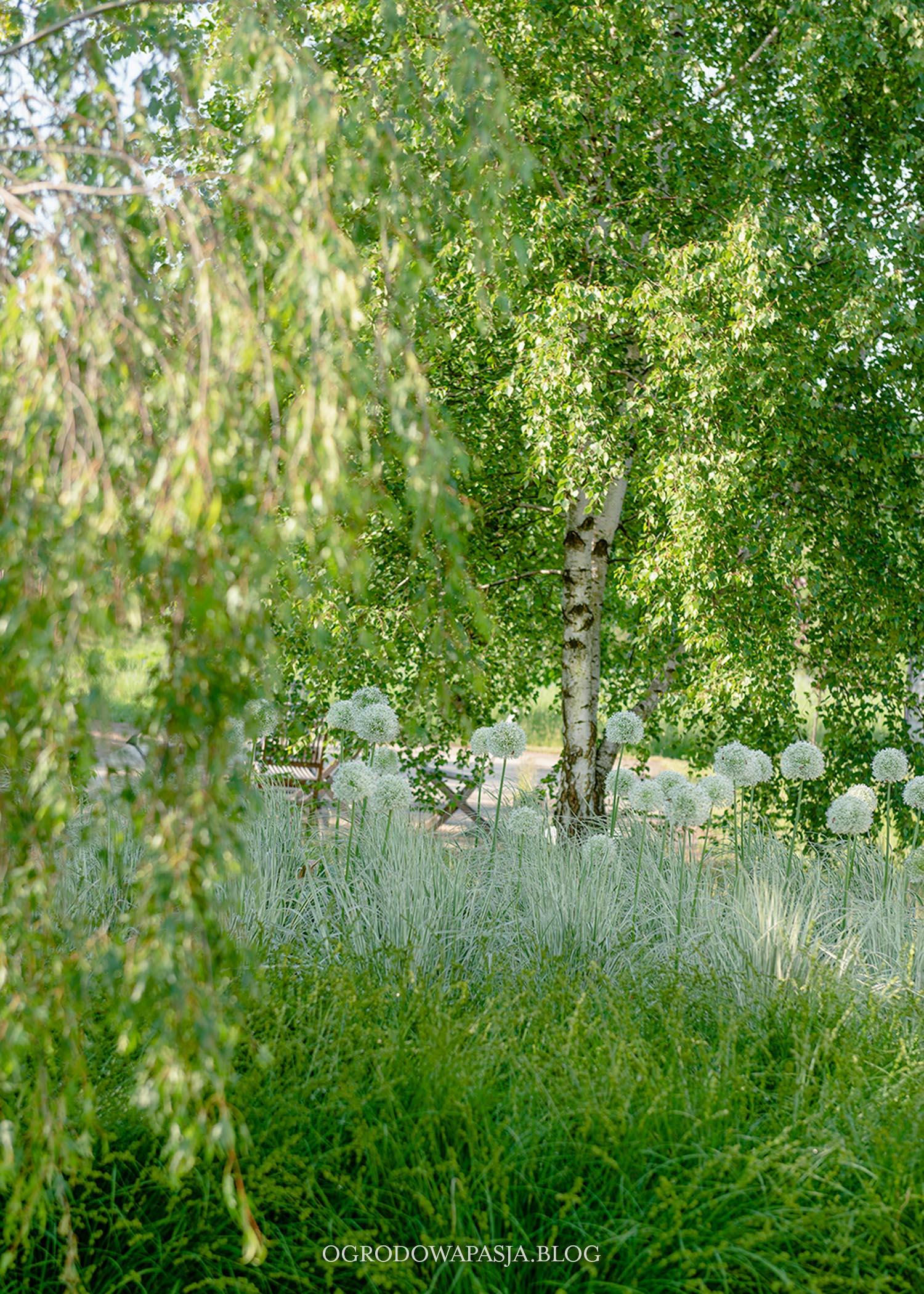 trawy ozdobne białe paski