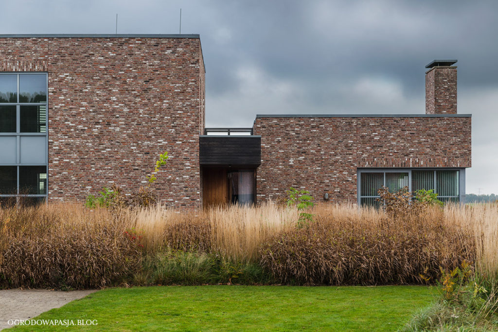 trawy ozdobne zimujące