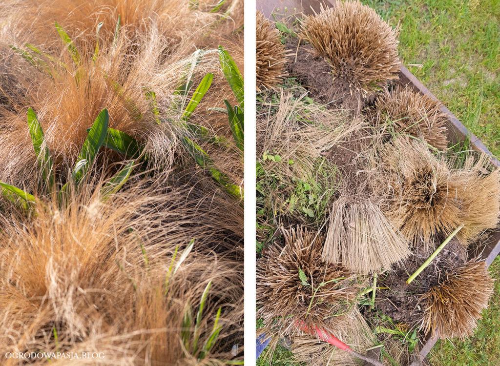 trawy ozdobne zmarzły