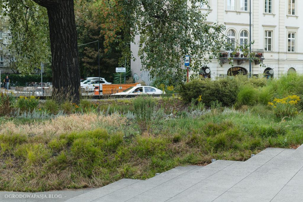 plac grzybowski zieleń