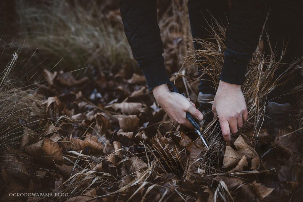 przycinanie traw ozdobnych