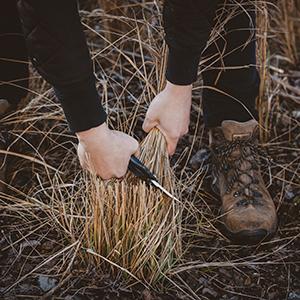 przycinanie traw ozdobnych wiosną