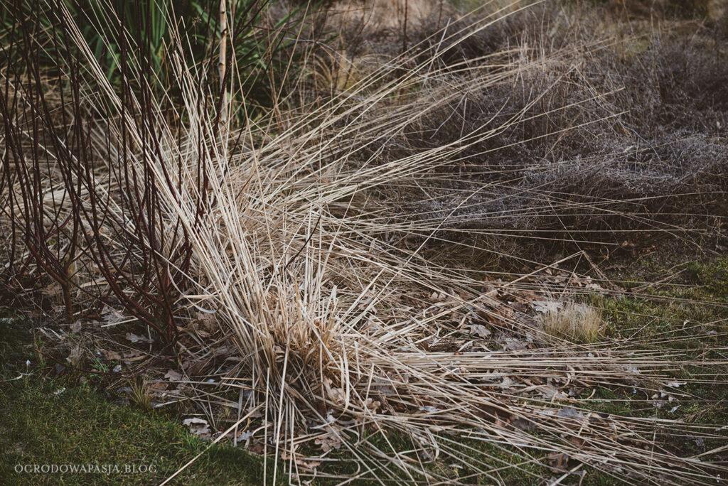 trawy ozdobne zimą