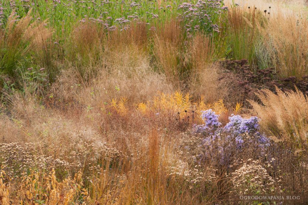 vlinderhof trawy